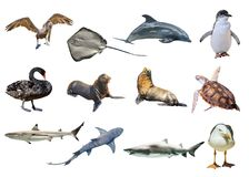 Австралийский коллаж животных стоковая фотография