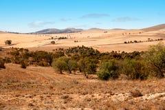 австралийский ландшафт Стоковое Изображение