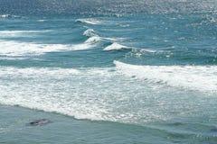 австралийский океан Стоковые Фото