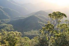 австралийский дождевый лес рассвета Стоковые Изображения RF