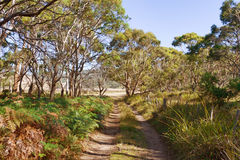 австралийский bush стоковые фотографии rf