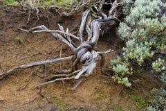 Австралия, ботаника, природа Стоковое Изображение RF