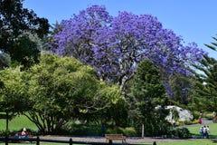 Австралия, NSW, Сидней, ботанический сад Стоковые Изображения RF