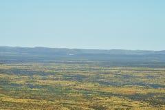 Австралия, NT, Alice Springs, зазор сосны стоковое фото rf