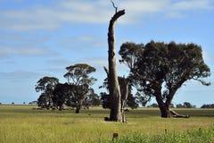 Австралия, VIC, земледелие Стоковое Изображение RF