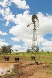 Австралийская ветрянка фермы злаковика Стоковые Изображения