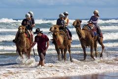 Австралийская езда верблюда Стоковая Фотография