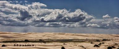 Австралийская езда верблюда Стоковые Изображения RF