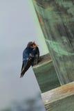 Австралийские птицы Стоковые Фото