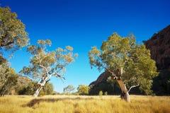 Австралийский ландшафт захолустья Стоковые Изображения