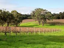 Австралийский виноградник стоковое фото