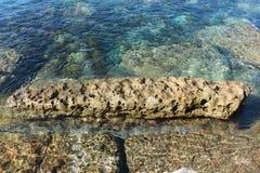 Австралийский коралловый риф, Currarong NSW Стоковые Фото