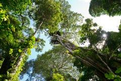 австралийский дождевый лес стоковое фото