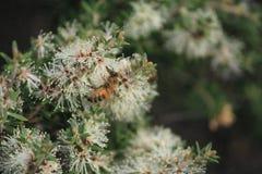 австралийский bush Стоковая Фотография