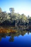 Австралийское река стоковые фотографии rf