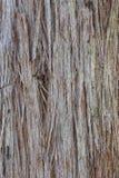 Австралийское Stringy дерево расшивы Стоковые Изображения RF
