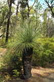 Австралия, ботаника Стоковая Фотография RF