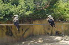 Австралия, зоология, птицы Стоковая Фотография