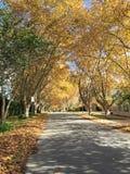 Австралия Перт холодный Стоковая Фотография