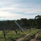 Австралия приносить ферма Стоковое фото RF