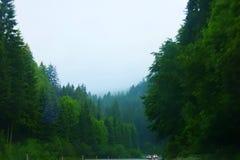 Австриец природы Стоковое Изображение RF