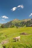 австрийские горы Стоковое фото RF