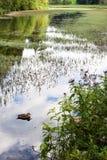 Австрийские топи около Sankt Ulrich am Pillersee Стоковое Фото