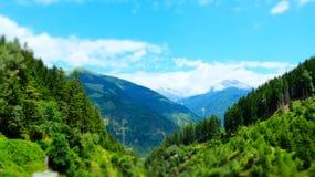 Австрийский высокогорный зеленый лес лета, Raggachlucht, Австрия стоковые фотографии rf