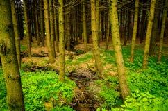 Австрия, лес Стоковое Изображение