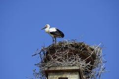 Австрия, зоология, гнездо аиста стоковое изображение rf