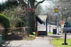 Автобусная остановка дерева разрушая в duri Лондона Стоковые Фотографии RF