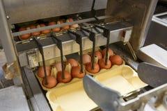 Автоматизированная упаковка сырцовых и свежих яичек цыпленка стоковые фото