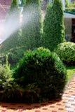 Автоматический мочить сада частного дома в раннем утре, boxwood Буша на переднем плане Стоковые Изображения