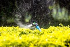 Автоматический сад брызгает мочит желтые заводы в саде Настолько свежий и мы смогите увидеть, что воду распространил и механизм п стоковые изображения