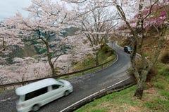 Автомобили путешествуя на curvy шоссе горы обматывая вверх по холму деревьев вишневого цвета Сакуры в Miyasumi паркуют, Okayama,  стоковая фотография rf