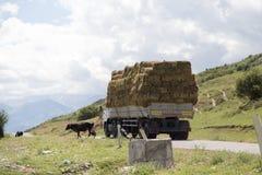 Автомобиль гружёный с сеном в природе стоковые фото