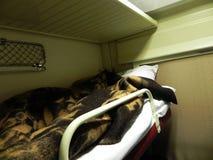 Автомобиль забронированного места на поезде Кровати на международном поезде Использованный пассажирами для спать и ослаблять стоковое фото rf
