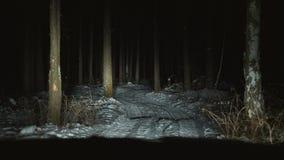Автомобиль управляет медленно вдоль узкой дороги леса в зиме видеоматериал