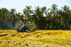 Автомобиль хлебоуборки в поле риса Стоковое Изображение