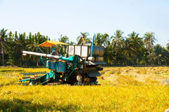 Автомобиль хлебоуборки в поле риса Стоковое Изображение RF
