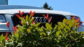 Автомобиль Audi Стоковые Фотографии RF