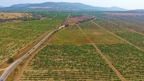 Автомобили управляют на дороге через красивые поля виноградника в горах сток-видео