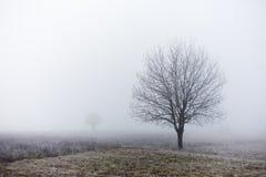Автономное дерево на утре падения туманном Стоковые Изображения
