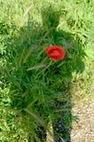 Автопортрет тени сердца цветка в поле Стоковое Изображение RF