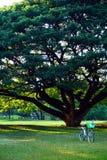 Автостоянка велосипеда в парке Wachirabenchathat или общественном парке положения железнодорожном имя общественного парка в район Стоковое Изображение RF