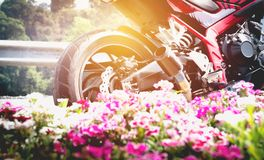 Автостоянка мотоцикла на правильной позиции дороги и розовом цветке Стоковая Фотография RF