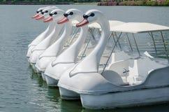 Автостоянка поплавка шлюпок лебедя в озере общественного парка Стоковые Фото