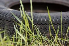 Автошина автомобиля на зеленой траве Стоковое Изображение RF