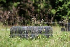 Автошина в поле Стоковое Изображение