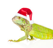 Агама крупного плана зеленая в красной шляпе рождества Изолировано на белизне Стоковые Изображения